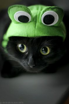 looks like my kitty back home <3