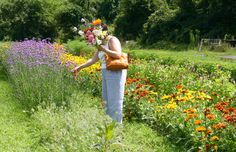 Small Farm Stow; pick your own bouquet