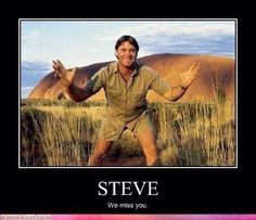 I remember a time when I never gave wildlife a first thought. Enter Steve Irwin, also known as, The Crocodile Hunter. Steve Irwin, Terri Irwin, Irwin Family, Crocodile Hunter, Bindi Irwin, Esfp, Famous Last Words, Mbti, Big Picture