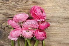 Pink persian buttercup flower (ranunculus)
