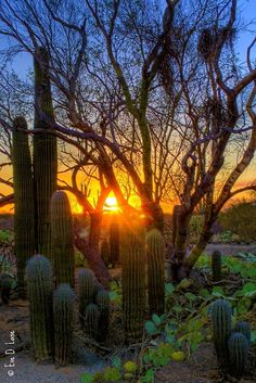 Sunset at Saguaro National Park, Tucson, Arizona