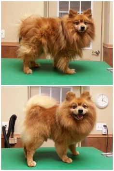 Before and after -- Grooming by Kristen