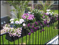 Rosanne Hinds' - Black Supreme Fiberglass Window Boxes on a rail