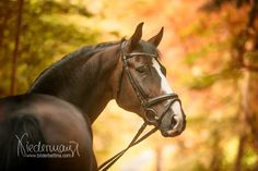 www.horsealot.com, the equestrian social network for riders & horse lovers | Equestrian Photography : Bilderbettina.