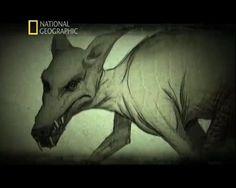 Bu hayvan mitolojik canavar Chupacabra olabilir mi? - LojiLoji.com http://www.lojiloji.com/bu-hayvan-mitolojik-canavar-chupacabra-olabilir-mi/