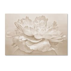 Shop for Cora Niele 'White Peony' Canvas Art. Get free delivery at Overstock.com - Your Online Art Gallery Store! Get 5% in rewards with Club O! - 19204701