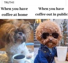 Crazy Funny Memes, Really Funny Memes, Stupid Funny Memes, Wtf Funny, Funny Laugh, Funny Relatable Memes, Funny Cute, Funny Dogs, Funny Stuff