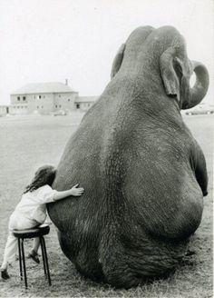 hug me elefante Cute Elephant Pictures, Elephant Love, Animal Pictures, Elephant Quotes, Elephant Art, Elephant Meaning, Funny Pictures, Happy Elephant, Elephant Sculpture