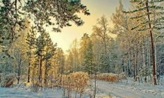 Зимний лес в Сибири