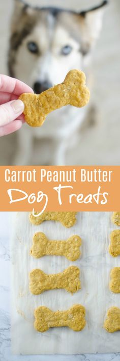 Carrot, Peanut Butter, and Oats Dog Treats recipe - your dog deserves a treat! These homemade dog treats are packed with carrots, peanut butter, and oats - all things your pup is going to love! Puppy Treats, Diy Dog Treats, Homemade Dog Treats, Healthy Dog Treats, Healthy Pets, Dog Biscuit Recipes, Dog Treat Recipes, Dog Food Recipes, Carrots And Peanut Butter