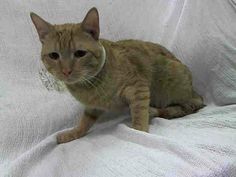 TO BE DESTROYED 12/6/13 Manhattan Center  My name is MIVEL. My Animal ID # is A0985795. I am a male red red. The shelter thinks I am about 11 MONTHS old.When Cage Opened: Remains soft and relaxed; Extend Hand: Sniffs and rubs hand in place Stroke: Allows the stroke and rubs hand Score: 8  https://www.facebook.com/photo.php?fbid=710801625598339&set=a.576546742357162.1073741827.155925874419253&type=3&permPage=1