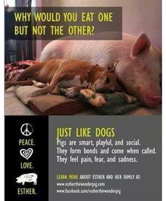 Honestly, I want a pet pig lol
