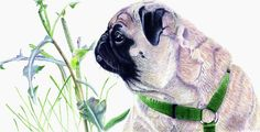 """""""In 19th century England, the breed flourished under the patronage of Queen Victoria. Her many pugs, which she bred herself, included Olga, Pedro, Minka, Fatima and Venus."""""""