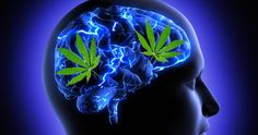 Did you know that marijuana is extremely beneficial for your brain? Here is a list of 5 incredible reasons you should probably consume more marijuana. 1. Brain Cell Growth - One of the few substances on the planet that actually helps your brain grow, cannabis is capable of producing neurogenesis. Several disorders, including depression, anxiety,…