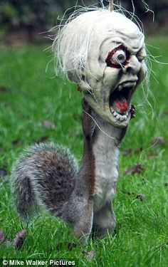 Known as The Tufty Terror, this poor squirrel managed to get his head stuck in a Halloween decoration in Fareham, Hants, England.