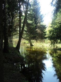 My beloved forest.