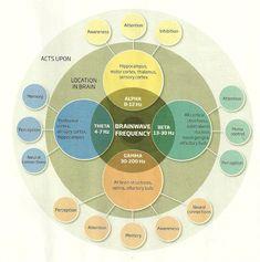 Dan Santucci • Brainwaves infographic.