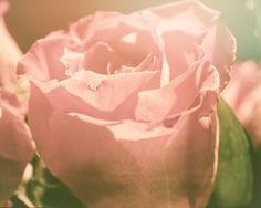 Vintage Pink Rose Photography, Botanical Print, Fine Art Rose, Wall Decor, Flower, Close-up Flower, Pink Petals - My Love