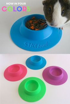 STAYbowl Tip-Proof Bowl for guinea pigs and other small pets is now available in four bright colors! This bowl prevents spills and mess, and will literally pay for itself.I am having problems believing this. Pet Guinea Pigs, Guinea Pig Care, Pet Pigs, Hamsters, Rodents, Chinchillas, Cavy Cage, Hamster Cages, Hedgehog Care