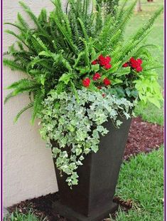 Large container with sun fern, geraniums, sweet potato vine and ivy Geranien # Front Porch Flowers, Planters For Front Porch, Summer Front Porches, Porch Plants, Pot Jardin, Outdoor Flowers, Container Gardening Vegetables, Vegetable Gardening, Garden Container