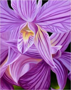 Striped Orchids ... oil paintings of tropical flowers by Anna Keay Fine Art Maui Hawaii orchids