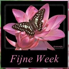 Fijne week
