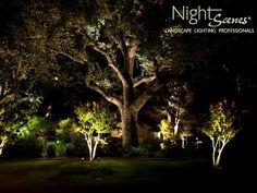 Oak <b>Tree</b> <b>Lighting</b> in Austin and Central Texas | NightScenes Landscape ...