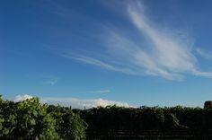 Blue sky http://verrinimunari.it