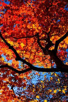Fall on Halla Mountain, #Jeju Island, Korea
