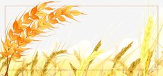 Simple golden wheat field background food promotion Powerpoint Background Design, Background Templates, Background Images, Banners, Nature Green, Food Promotion, Wheat Fields, Banner Images, Text Effects