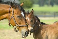 horses | Nitrate toxicity is becoming more common in Horses