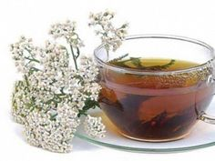 Yarrow tea has astringent properties that help treat runny nose or eyes moistening caused by mold, pollen or dust. Yarrow Uses, Runny Nose, Natural Lifestyle, Natural Health Remedies, Healing Herbs, Achillea, Medicinal Plants, Natural Treatments, Herbal Medicine