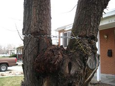 Most people dont think of anything of tying or wrapping something around a tree. They assume because the tree seems tough, it will take it without a problem. But as you see, that is not always the case. In fact, it is rarely true. Even a temporary string put around a tree can cause damage to a thin barked tree if there is any movement.  Lots of damage is done by things that are on the tree for more than a day or two.