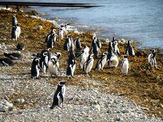 Monumento Natural Los Pinguinos, Punta Arenas, Chile