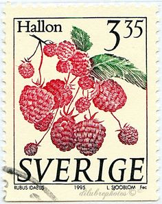 Sweden.  FRUIT.  RIBES NIGRUM.  Scott 2001 A596a, Issued 1995 Jan 2, Engr., Perf. 12 1/2  on 3 Sides, 3.35. /ldb.