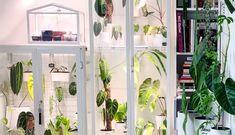 Ikea Fabrikor, Indoor Greenhouse, Greenhouse Ideas, Ikea Cabinets, New Condo, Glass Cabinet Doors, Interior Garden, Garden Features, Ikea Furniture