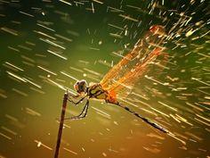 Dragonfly in the Rain (BrettHeideJones)