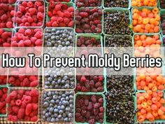 Simple Trick To Prevent Moldy Berries