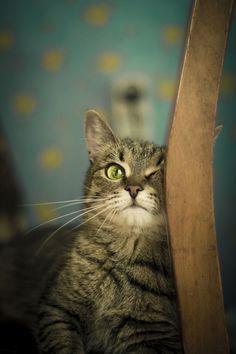 Kitty cat.  Totally my cat.