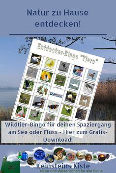 Ich habe das Glück, direkt am Zürichsee zu wohnen, dessen Ufer hier zu weiten Teilen naturbelassen und geschützt sind. So kann man hier wunderbar durch die Landschaft laufen und Vögel und Tiere beobachten und...Bingo spielen, Und zwar Wildtier-Bingo - die Natur selbst zieht dabei die Lose! Wie das funktioniert und wo ihr euch gratis eine Bingo-Karte mit spannenden Tierarten rund um den See ausdrucken könnt, erfahrt ihr jetzt in Keinsteins Kiste: Bingo, Kindergarten, Photo Wall, Frame, Types Of Animals, Natural Wonders, Garden & Outdoor, Hiking Trails, River