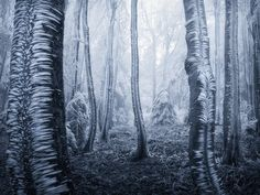 Frozen Forest by Jan Bainar