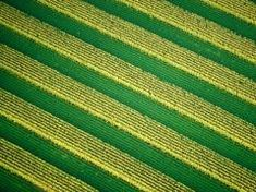 Study challenges soil testing for potassium and the fertilizer value of potassium chloride