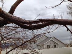 Fruit Tree Pruning at Its Best: Removing Broken Branches
