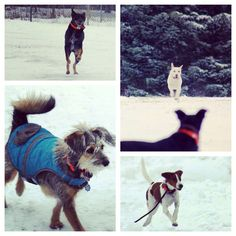 Run & play all day long, that's our job! #evasplaypupspa #dogs #dogcamp #doggievacays #playtime #letitsnow #dogsinnature #runfree #badassbk #adoptdontshop #rescuedog #houndsofinstagram #shepardsofinstagram #wireypup #labsofinstagram #dogsofinstagram #sweaterweather #endlessmountains #mountpleasant #PA #pennsylvania