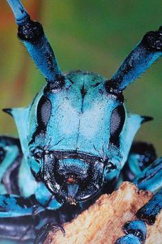 パンデモニウム-昆虫顔面図鑑11