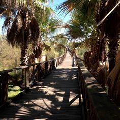 El chiringuito de Antonio – Punta del Moral (Isla Canela - Huelva)