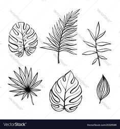Hand drawn branches and leaves of tropical plants Vector Image planting Leaf Outline, Outline Art, Flower Outline, Outline Drawings, Easy Drawings, Tropisches Tattoo, Tattoo Set, Leaf Drawing, Plant Drawing