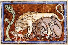 Secondo il testo del Physiologus i leoni sarebbero stati in grado di resuscitare i propri cuccioli morti soffiando loro sul volto (in questo caso leccandoli). XIII secolo, Londra, British Library, Ms Royal 12 C XIX, particolare del f.6.