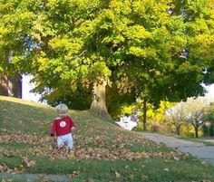 Five free ways to have fun with your toddler or preschooler in fall