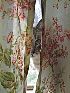 kann ich rein kommen?